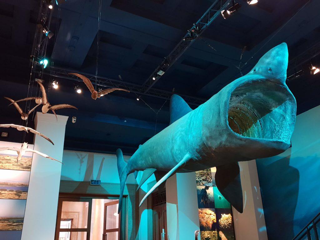Национальный музей Кардиффа