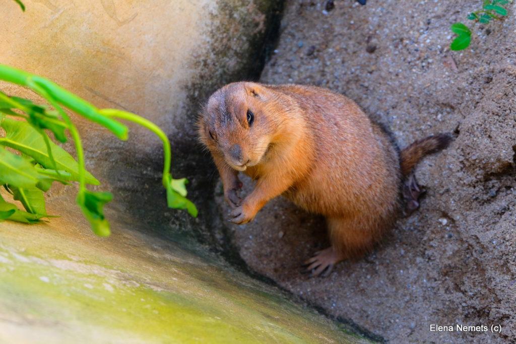 Контактный зоопарк Чианг Май