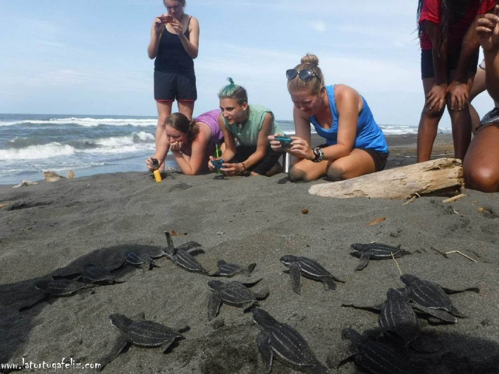 La Tortuga Feliz eco project