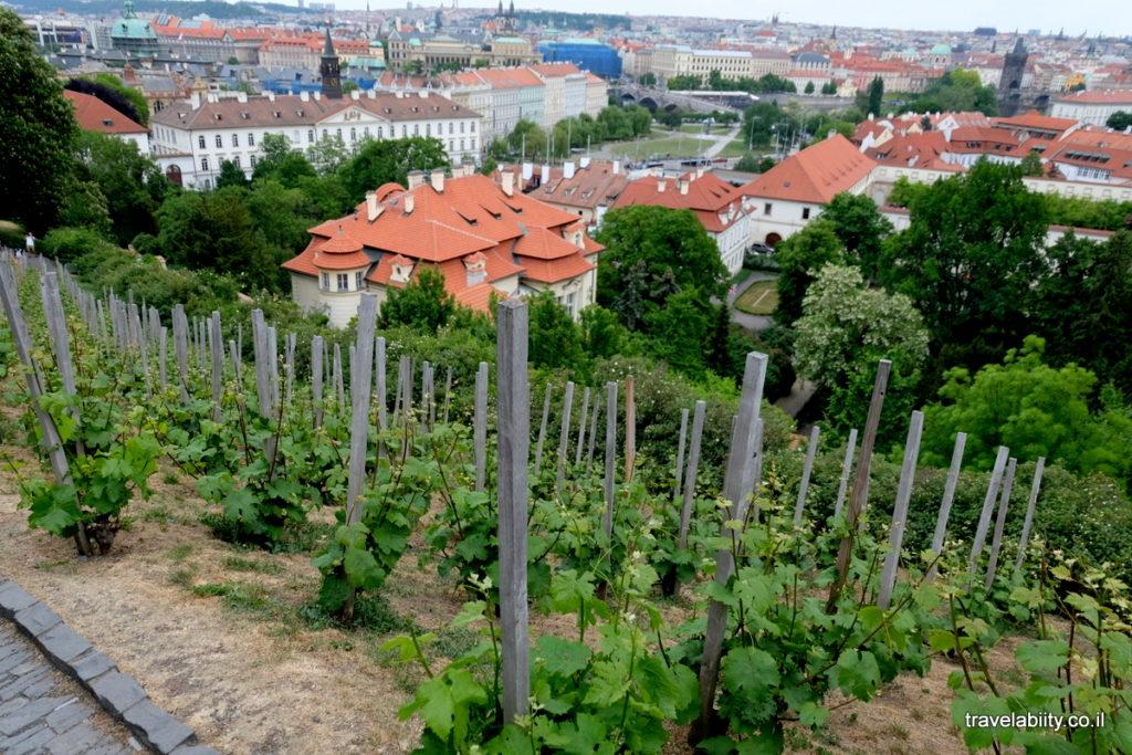 винарна Прага