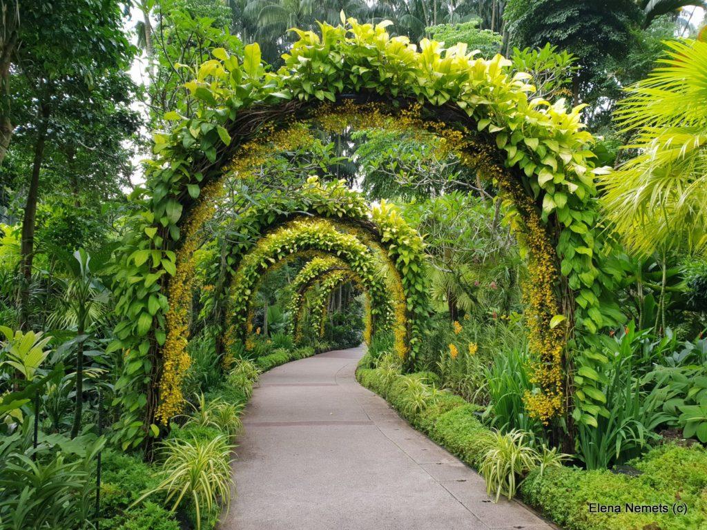 ботанический сад Сингапур
