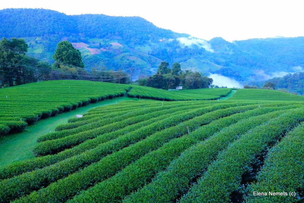 чай Таиланд